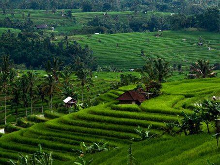 How to Get to Ubud from Denpasar ?